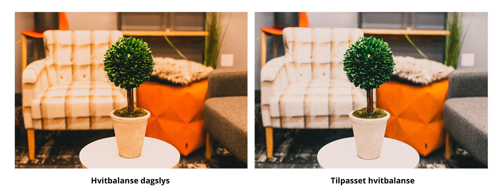 Bilde av en plante for å vise forskjellen mellom hvitbalanse dagslys og tilpasset hvitbalanse. Tenkt på kamera innstillinger når du tar opp video.